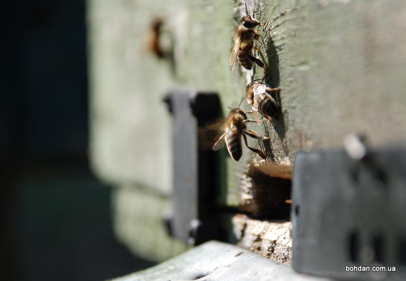 бджоли вулик